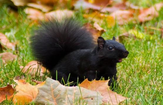 scoiattolo aspromonte gambarie